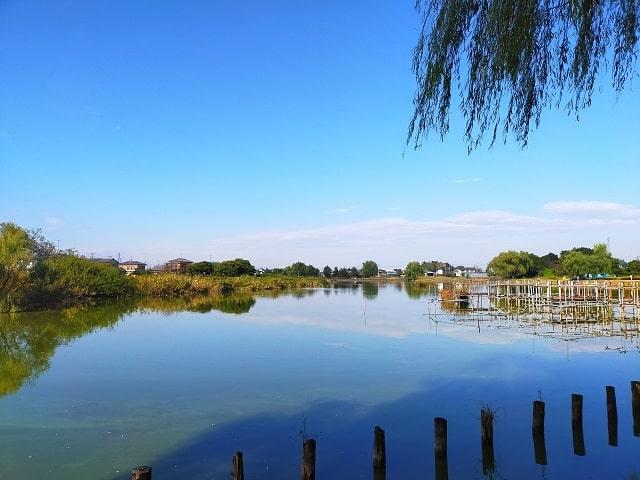 蓮田市のイメージ